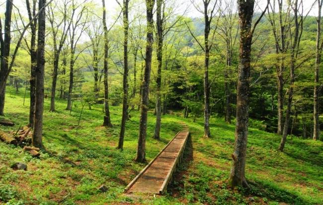 裏に広がるケヤキの森の散策路を楽しむことができます
