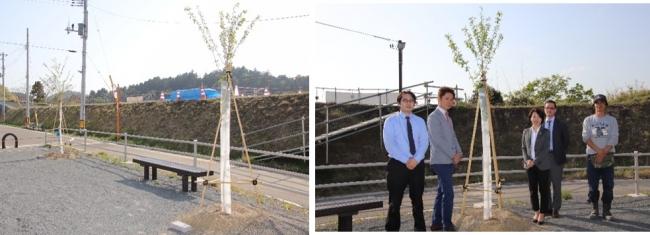 給分高台移転地  2018年4月29日訪問時の桜の木(左)、さくら並木ネットワーク様と当社スタッフ(右)