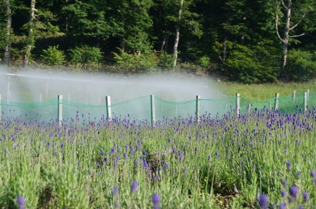 【7月1日撮影】園内には湧水とスキーシーズンの降雪用池を活かした滝の演出も