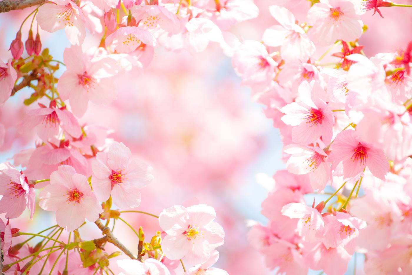 春爛漫!桜スィーツナイト開催~人気占い師による開運セミナーと春色