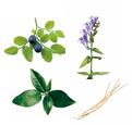 4種の植物エキス
