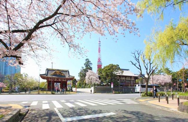 芝公園から見える桜と東京タワー