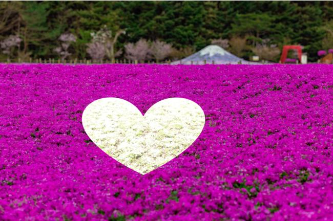 ※ハートを象った芝桜植栽(※イメージ)