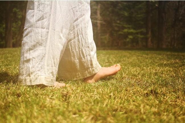 森を歩き、自然と出会う。