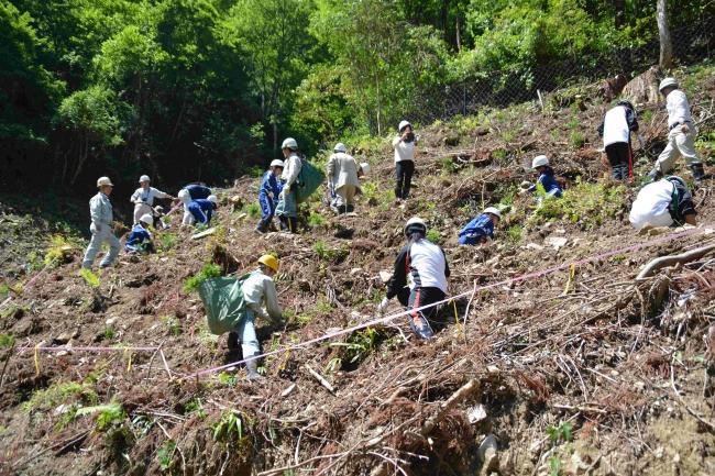「第8回ニチバン巻心ECOプロジェクト」 環境保全活動報告 マングローブ植樹(フィリピン)に加え 新たに「森のしずく」保全活動を実施