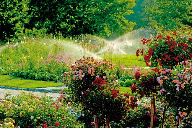 ソティス発祥の地、フランス中南部オーリアック村。この森と川に恵まれ自然豊かな土地で育まれた花々やハーブなどをイメージし、美と健康に着目した軽やかなアフタヌーンティーに仕上げました。