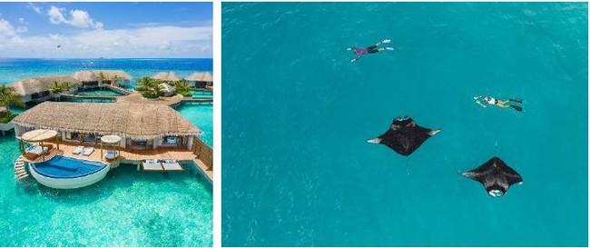 左: WモルディブのWOWオーシャンエスケープ/ 右:ウェスティン・モルディブ・ミリアンドゥーリゾートにて、マンタ一緒にシュノーケリング