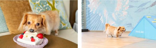 左/ワンちゃん用ケーキイメージ              右/ドッグランエリアイメージ