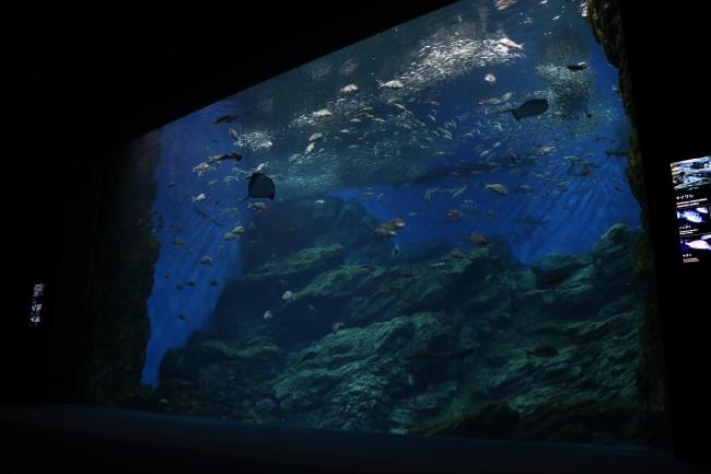 幻想的な夜の大水槽「いのちきらめく うみ」の前で就寝