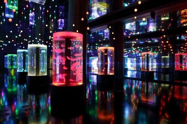 「Jellyfish Ramble」※イメージ