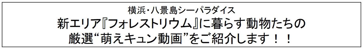 八景島 シー パラダイス 動画