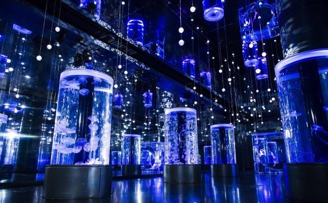 「Jellyfish Ramble」 ※イメージ