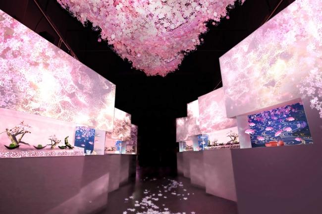 「零れ桜 ※イメージ」
