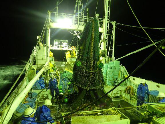 底引き網漁業の様子