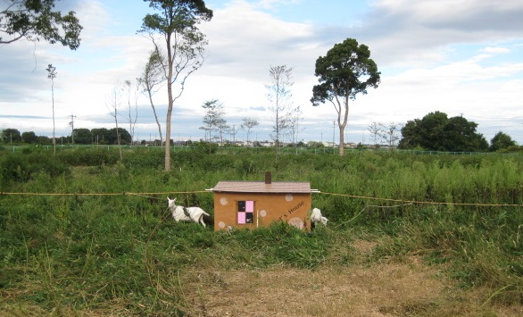 敷地内のヤギ小屋と2匹の様子