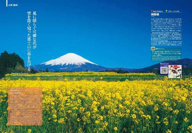 御殿場の菜の花畑と富士山。空の青と富士山の白、花畑の黄色とのコントラストが美しい