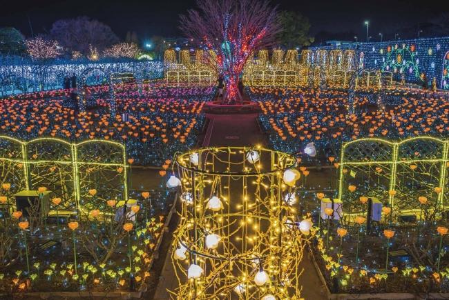 あしかがフラワーパーク 光の花の庭 Flower Fantasy