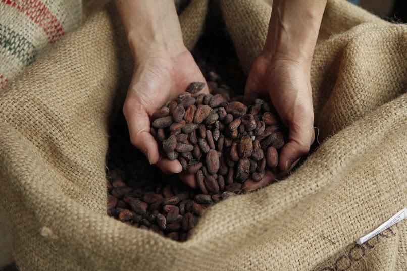 ビーントゥーバーチョコレート専門店ならではのバレンタイン新商品を2種同時に発売!カカオハンター×Minimal:世界中で当店しか扱っていないカカオ豆から作った特別板チョコレート!