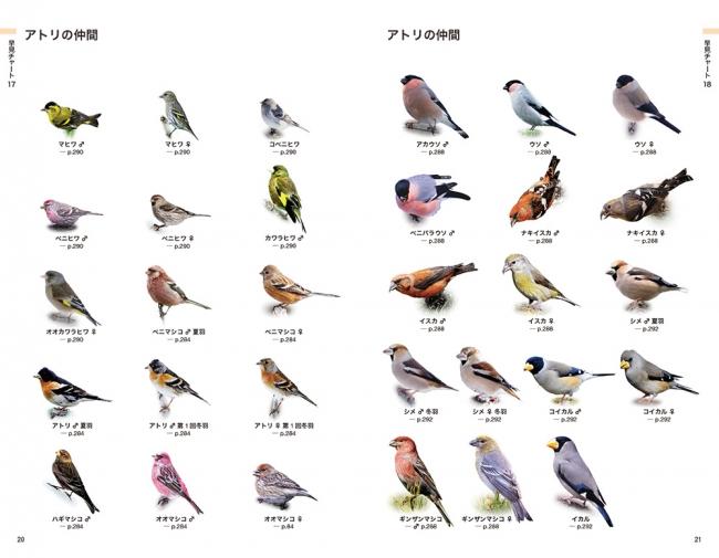 知りたい野鳥が早見チャートですぐわかる! 野鳥観察に役立つ一冊 ...