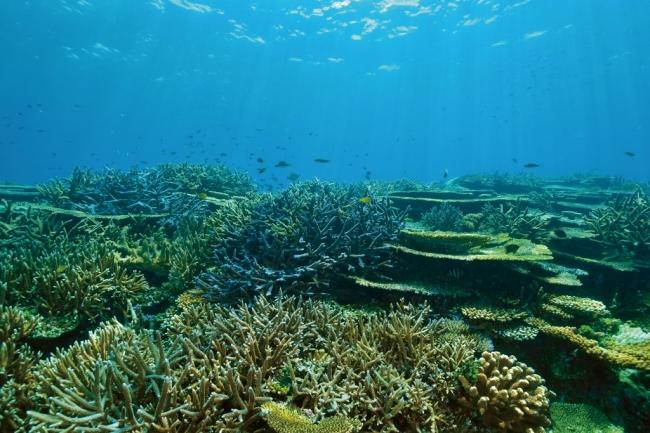 当ホテル近海のサンゴ礁