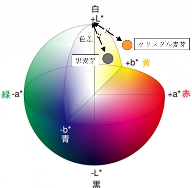 図2. クリスタル麦芽と黒麦芽を用いたビールの泡の色調(Lab色空間色度図)