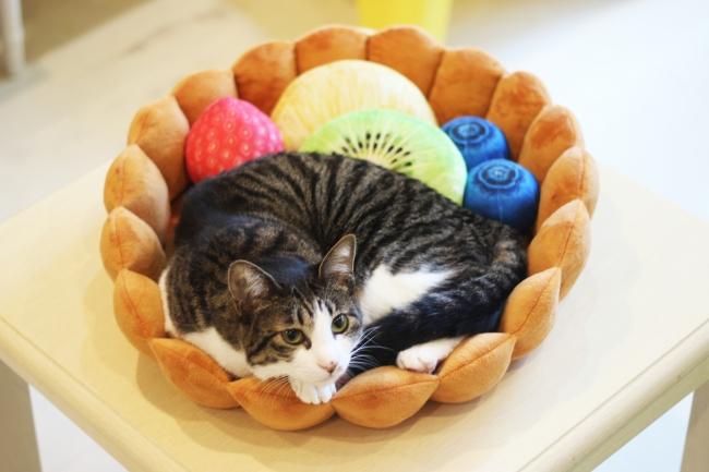 モデル猫:メス・体重4.3kg