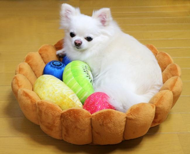 モデル犬:オス・体重4kg