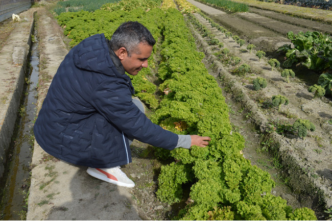 地元食材の魅力を再発見!関西圏の農園で育った野菜を味わう