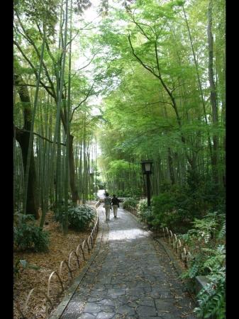 竹林の古径(イメージ)