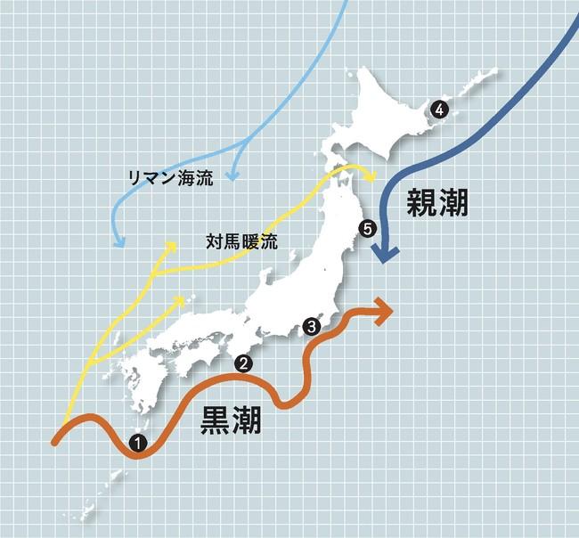※ 黒潮と親潮・5つの海域 イメージ図