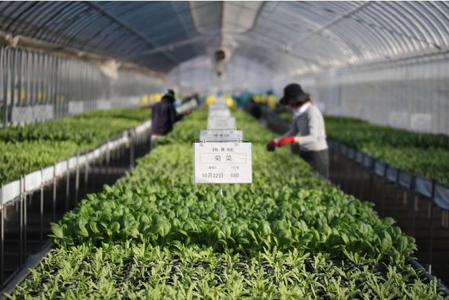 ハウス内で農薬化学肥料をつかわず栽培