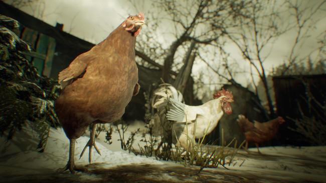 村には鶏や豚、山羊などの家畜が残されている