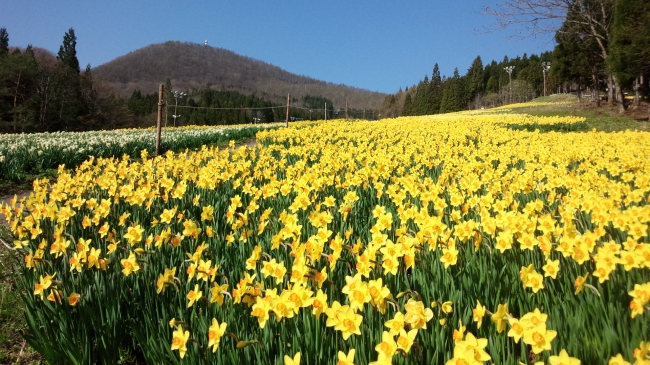 4 月 デート 関東