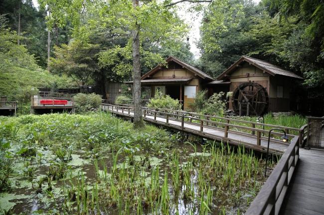 四季折々の山野草が群生し、水車小屋のある山野草園