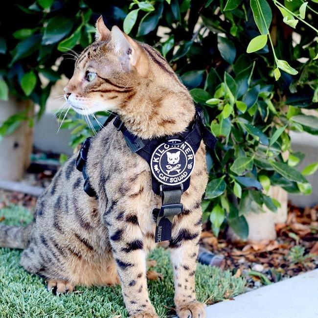 軽量で猫隊員にも人気!