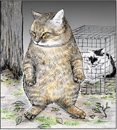 15万部突破のTwitter発、大ヒットリアル猫マンガおぷうのきょう