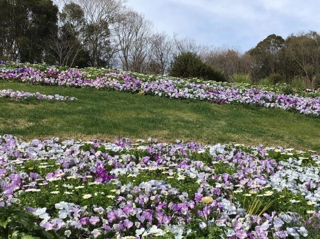 里山ガーデン(3月18日現在)