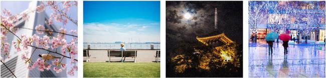 ※展示する横浜の美しい四季の一例