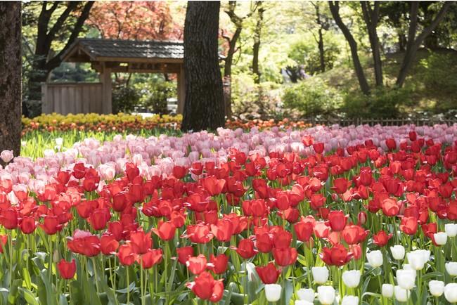 横浜公園(過去の画像)