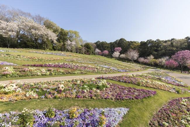 里山ガーデンの大花壇(過去の画像)