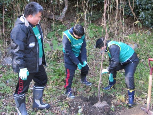 桜苗の植込作業