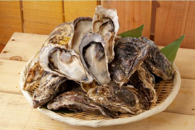 播磨灘産の一年牡蠣