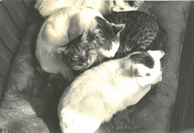 猫は、生涯の伴侶3