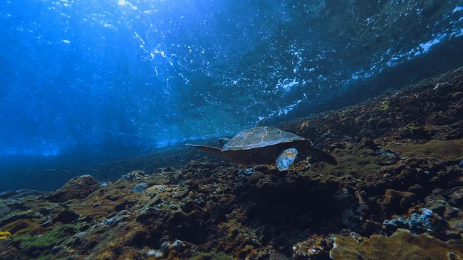 吉岡里帆&HIKAKIN と行く「奇跡の島 ハワイ冒険ツアー」より