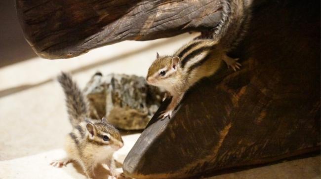 シマリスを中心に可愛らしい小動物に出会える 「アニマルヴィレッジ」
