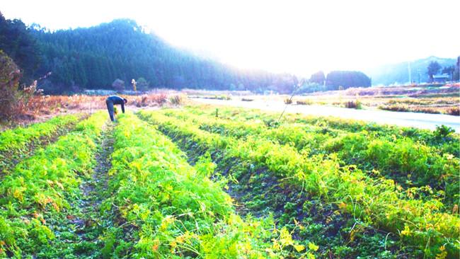 あんがとう農園(石川県能登半島)