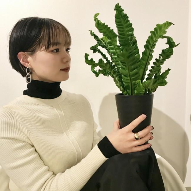 ミズキ: 植物集めとインテリアと 中華料理が好き。 @mizu024