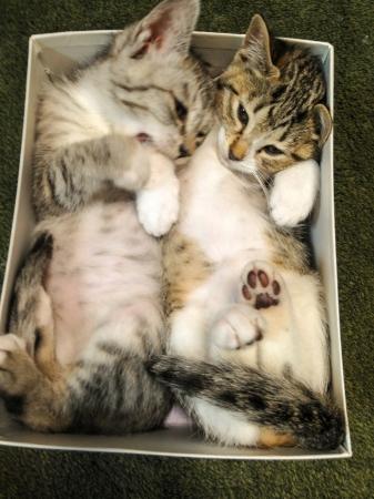 箱のなかに収まる「サバ身、トラ身」