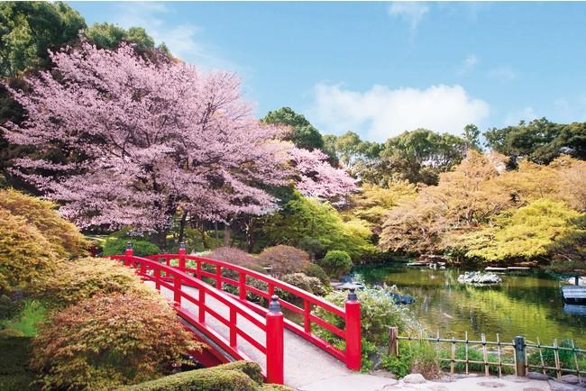 19種58本の桜が次々に開花する、ホテルニューオータニの日本庭園