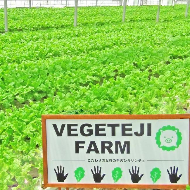 契約農家から毎日直送されるベジテジや専用「女性の手のひらサンチュ」。なんと食べ放題!